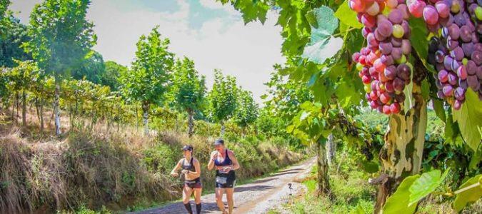 Maratona do Vinho celebra temporada da safra da uva, em fevereiro