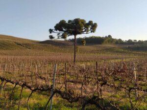 Queijos e Vinhos @ Vale das Vinhas Turismo