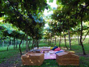 Piquenique na Serra @ Giordani Turismo e Eventos
