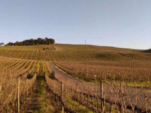 Bento Wine Day @ Vale das Vinhas Turismo